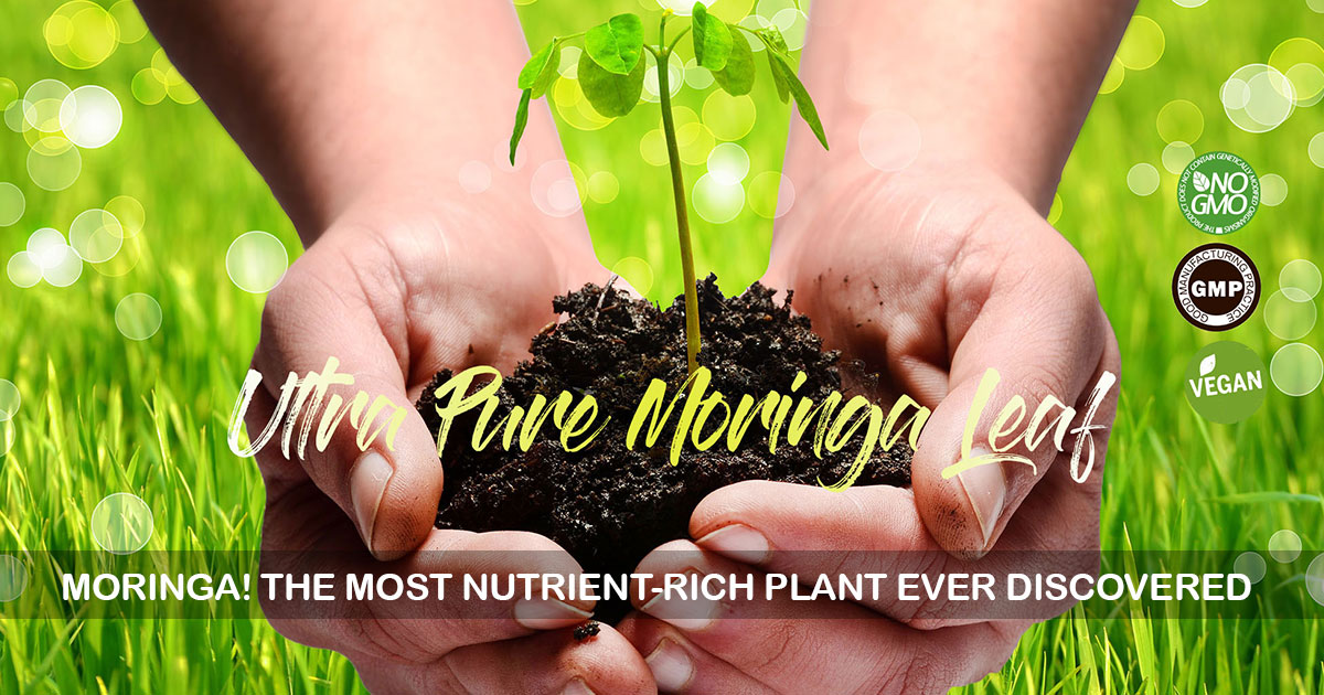 Moringa! The most nutrient-rich plant ever discovered